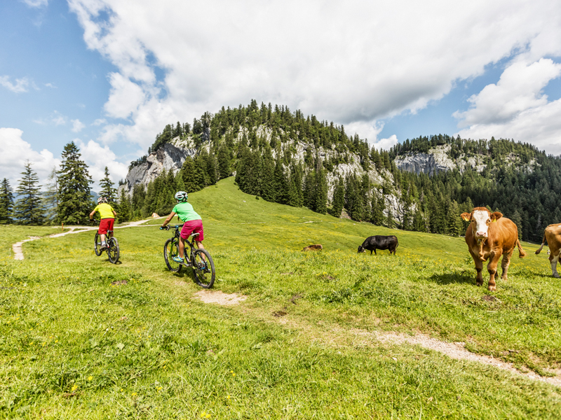Mountainbiken auf den Almen im Dachstein Salzkammergut